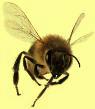 Beeflyingcuta3